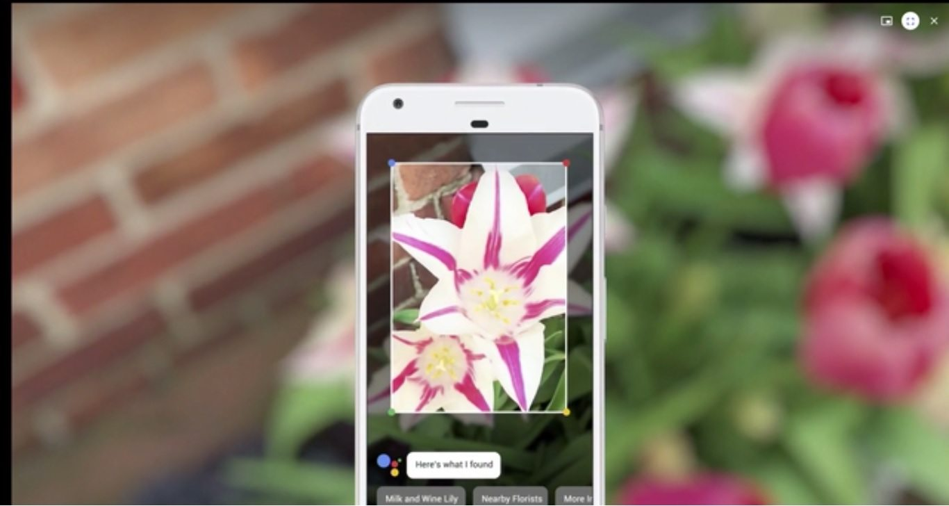 google lens and google home demo given at google io where google lens is describing knowledge about a flower
